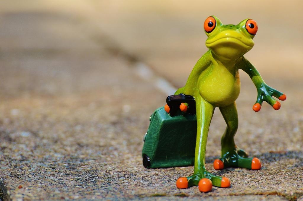 frog-897418